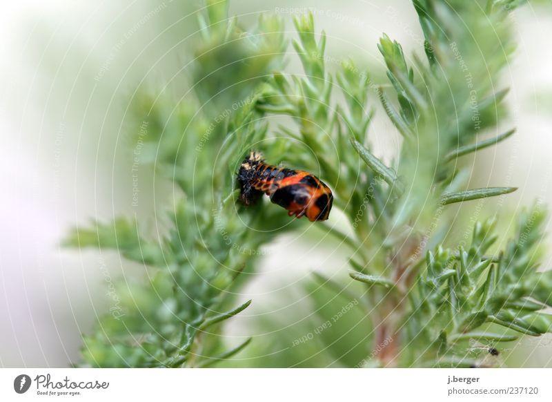 whooshhh Natur Pflanze Tier Totes Tier Insekt 1 außergewöhnlich grün rot schwarz Klebrig kaputt Farbfoto mehrfarbig Außenaufnahme Detailaufnahme Tag Unschärfe