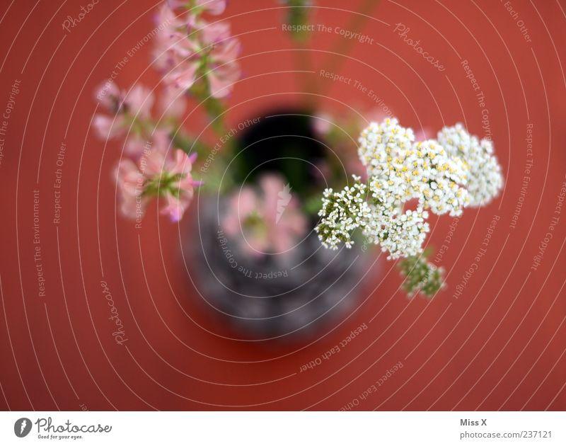 Blumenvase Blatt Blüte Blühend Duft rot Gewöhnliche Schafgarbe Gartenwicke Blumenstrauß gepflückt Wiesenblume Farbfoto mehrfarbig Innenaufnahme Menschenleer