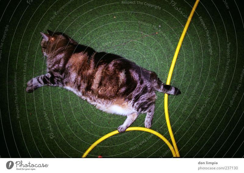 katzensprung Tier Haustier Katze 1 Erholung liegen schlafen grün Kunstrasen Schlauch Vignettierung analog Momentaufnahme trashig Übergewicht dick authentisch