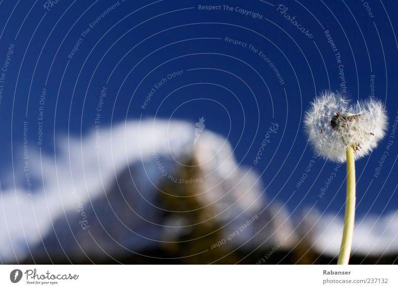 Pustewolke Himmel Natur schön Pflanze Sommer Wolken Berge u. Gebirge Freiheit Stimmung Schönes Wetter Löwenzahn Schneebedeckte Gipfel