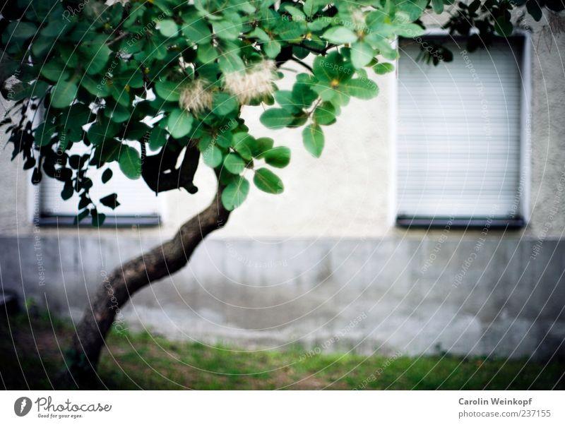 Berliner Fenster. Menschenleer Haus Mauer Wand Fassade blau Baum Farbfoto Außenaufnahme Textfreiraum unten Rollladen geschlossen grau trist