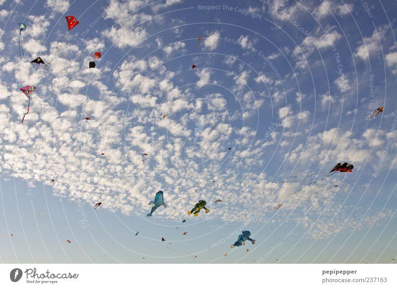 unbekannte flugobjekte Himmel Sommer Wolken oben Bewegung Wind Freizeit & Hobby fliegen außergewöhnlich ästhetisch viele Schönes Wetter Froschperspektive