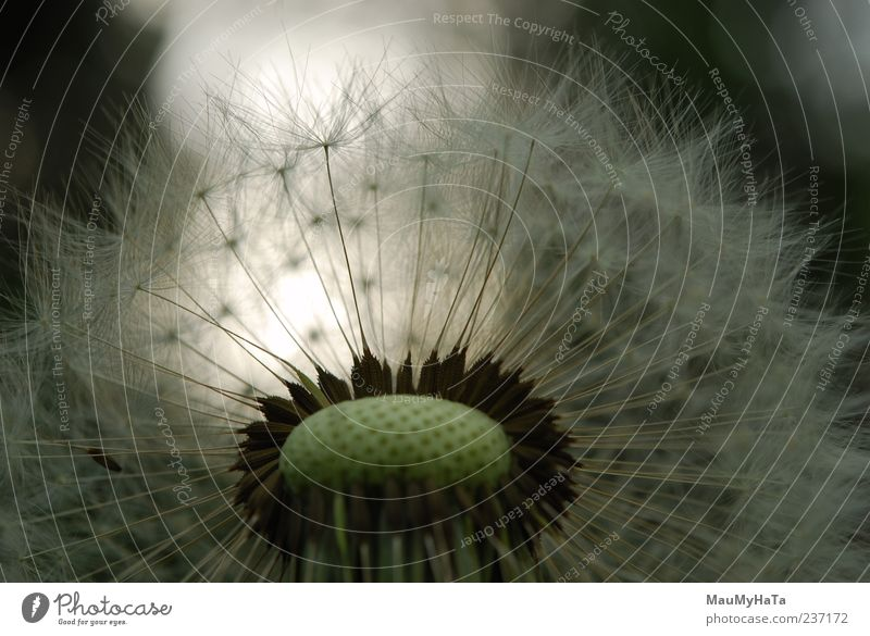 Himmel Natur Pflanze Erholung Blume Gras Frühling Stil Garten Erde Park Kraft Design Energie Unendlichkeit Ende