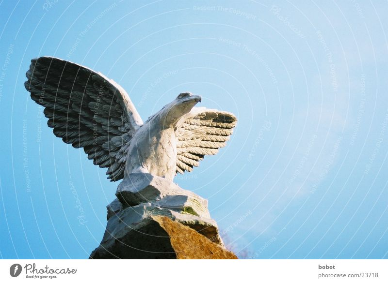 Stoned III Statue Adler stagnierend Feder Sonnenaufgang Beton Kunst Bildhauerei Vogel Handwerk Greifvogel Flügel fliegen Himmel blau Stein versteinert