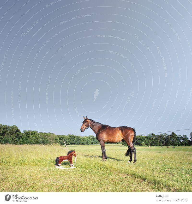 der plagiator Umwelt Natur Landschaft Pflanze Tier Wolkenloser Himmel Gras Sträucher Grünpflanze Wildpflanze Wiese Nutztier Pferd 2 Blick Neugier Schaukelpferd