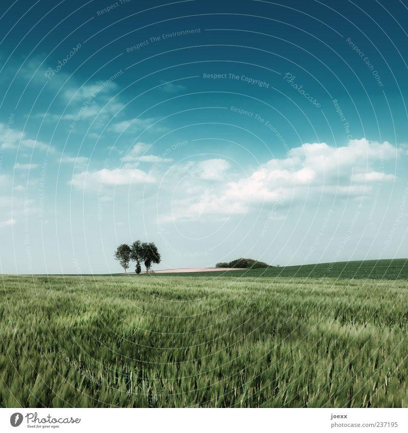 Heile Welt Himmel Natur blau weiß grün schön Baum Pflanze Sommer Farbe Wolken ruhig Ferne Landschaft Feld Idylle