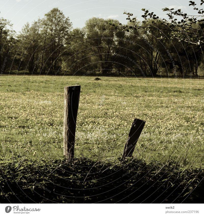 Pat & Patachon Umwelt Natur Landschaft Pflanze Himmel Klima Wetter Schönes Wetter Baum Blume Gras Sträucher Blatt Wiese Wald stehen warten grau grün standhaft