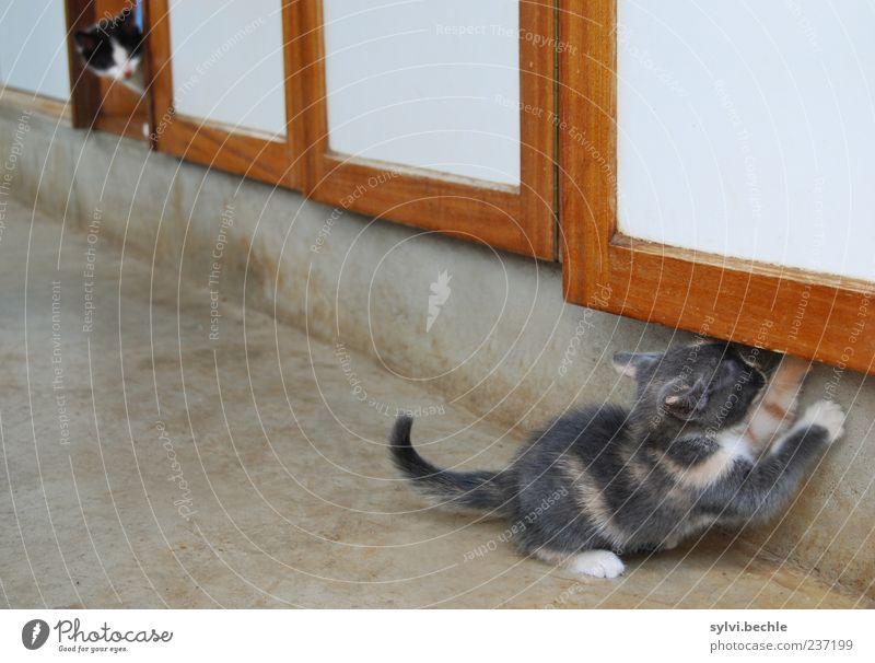 ausgetrickst Katze Tier Spielen Tierjunges Zusammensein Wohnung Häusliches Leben planen Suche niedlich beobachten weich Neugier Fell Möbel Mut