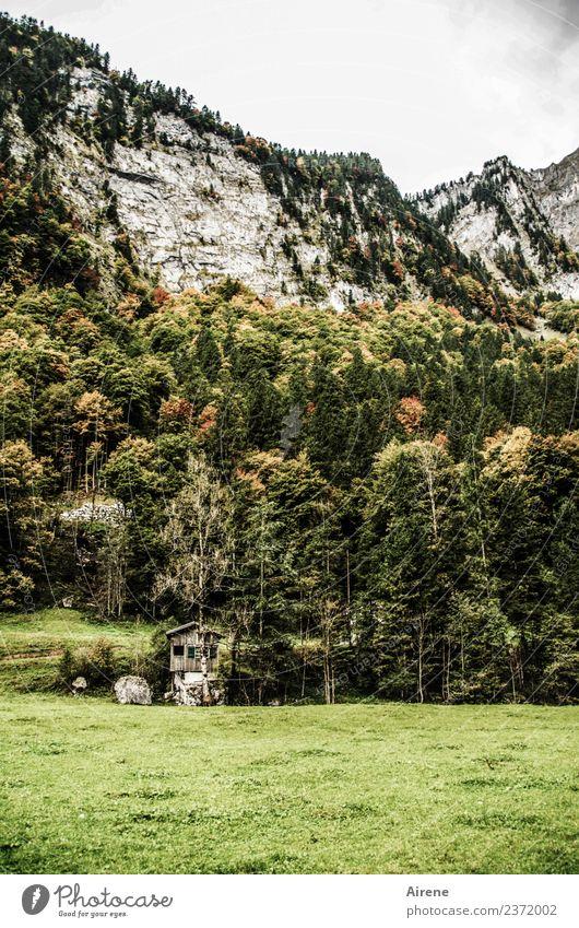 Ablehnung | Bitte eine andere Unterkunft! Baum Wald Felsen Alpen Berge u. Gebirge Bregenzerwald Steilwand Hütte Alm Berghütte Holzhütte alt einzigartig klein