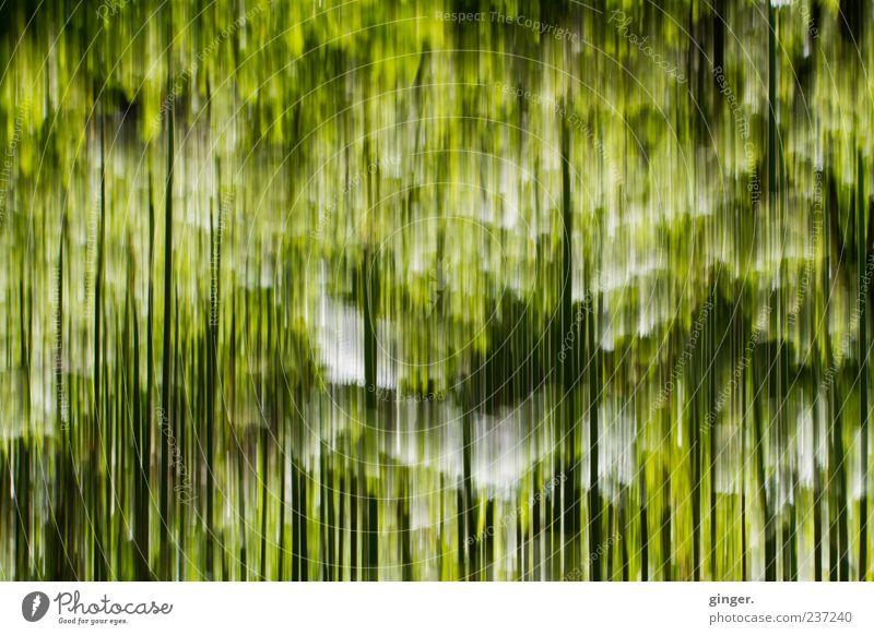 Gräser Natur Pflanze Gras grün Streifen lang gezogen fallen schwarz weiß Linie außergewöhnlich Farbfoto Außenaufnahme Experiment abstrakt Muster