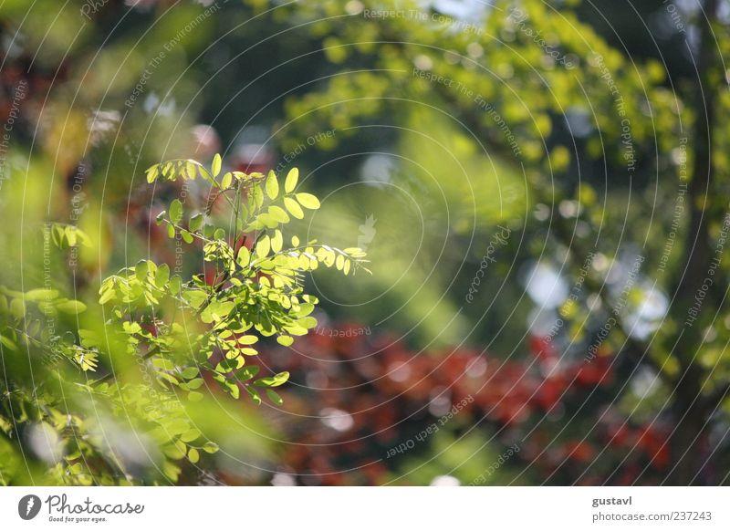 Nicht nur grün blühts im Frühling Natur Umwelt Schönes Wetter Zweig Wildpflanze