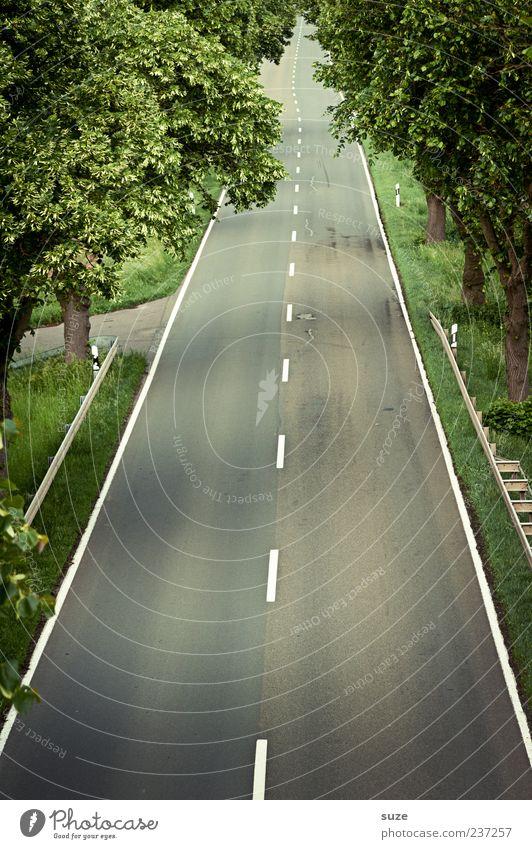 Schnellstraße Umwelt Baum Verkehr Verkehrswege Straße Wege & Pfade authentisch lang natürlich Ziel Asphalt Landstraße gerade Mittellinie Allee Farbfoto