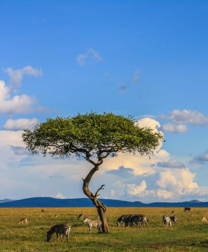Kenia's Vielfalt Ferien & Urlaub & Reisen Tourismus Ausflug Abenteuer Ferne Freiheit Safari Expedition Umwelt Natur Landschaft Himmel Wolken Horizont Baum
