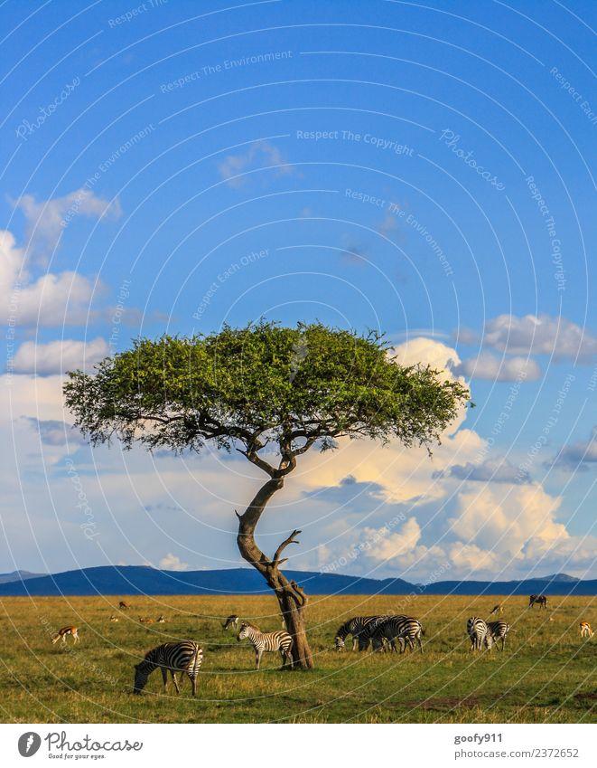 Kenia's Vielfalt Himmel Natur Ferien & Urlaub & Reisen Landschaft Baum Wolken Ferne Umwelt Tourismus Freiheit Ausflug Horizont Wildtier Abenteuer Tiergruppe