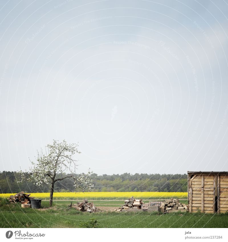 pflanzstück Himmel Natur blau grün Baum Pflanze Wald Umwelt gelb Landschaft Wiese Frühling Gras Feld Hütte Rapsfeld