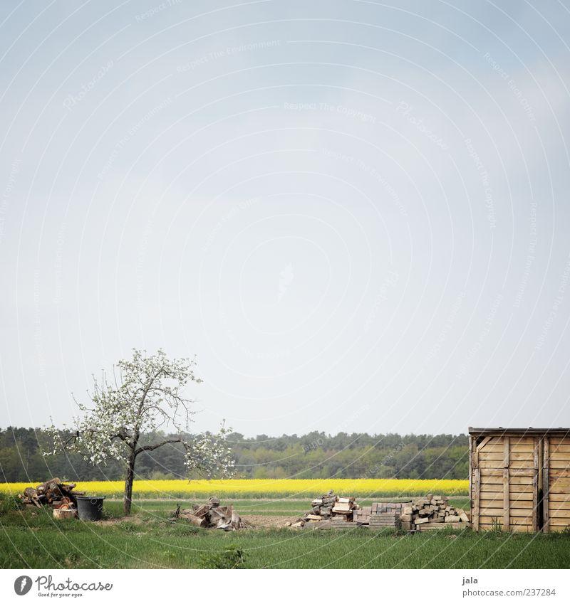 pflanzstück Umwelt Natur Landschaft Pflanze Himmel Frühling Baum Gras Rapsfeld Wiese Feld Wald Hütte blau gelb grün Farbfoto Außenaufnahme Menschenleer