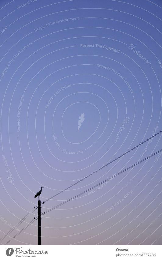 Storch Himmel blau Tier Vogel stehen Strommast Textfreiraum Hochformat