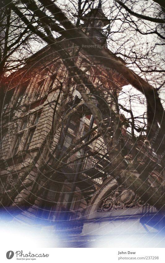 Dornröschen in da Big Ciddy alt Baum Fenster Architektur Gebäude Fassade Wachstum Sträucher einzigartig Vergänglichkeit Ast geheimnisvoll Bauwerk historisch