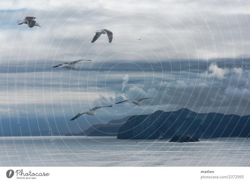 Abend an der Bizkaya Landschaft Wasser Himmel Wolken Gewitterwolken Horizont Sommer schlechtes Wetter Felsen Berge u. Gebirge Küste Bucht Meer Wildtier Vogel