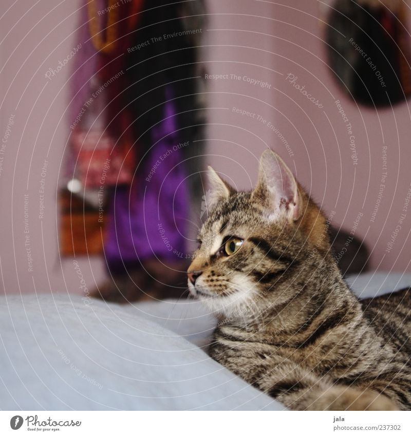 mann im mädchenzimmer Katze Tier Wohnung liegen Häusliches Leben Tiergesicht genießen Wachsamkeit gemütlich Haustier Hauskatze