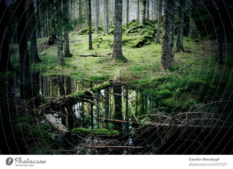 Deutscher Wald. Umwelt Natur Landschaft Herbst Baum Sträucher Moos Wiese Hügel Reflexion & Spiegelung Deutschland Schwarzwald grün Farbfoto Außenaufnahme