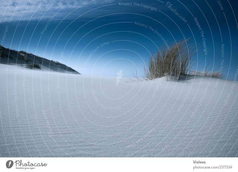 Spiekeroog | ...infinite dunes Natur Landschaft Himmel Strand Erholung blau Dünengras Stranddüne Nordseeinsel Sand Farbfoto Außenaufnahme Textfreiraum unten