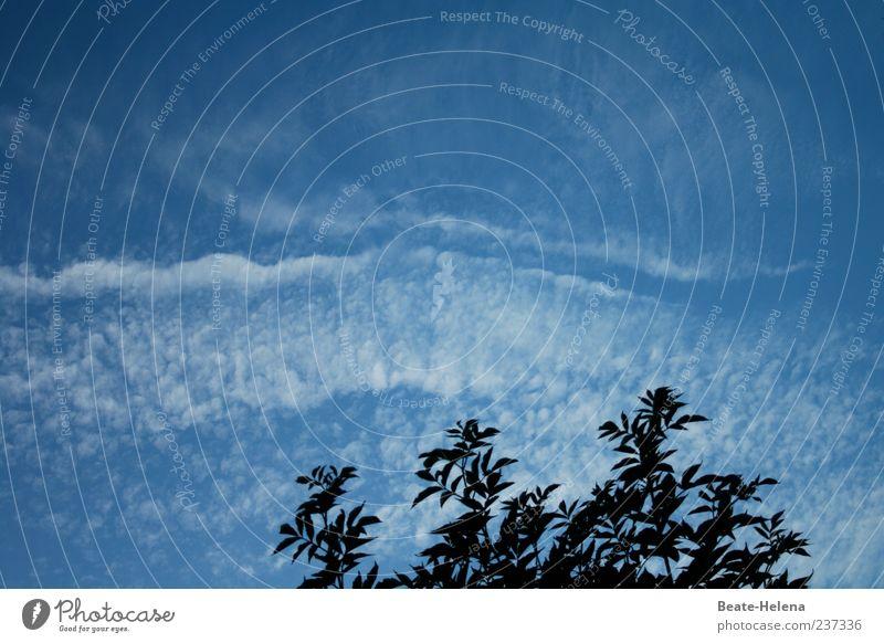 Es liegt was in der Luft Himmel Natur blau weiß Baum Sommer Blatt Wolken Bewegung Wetter außergewöhnlich natürlich ästhetisch Schönes Wetter Baumkrone himmlisch