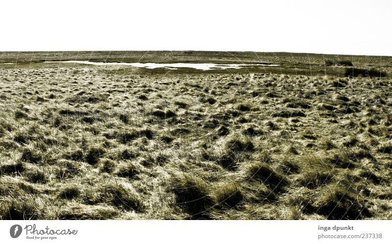 Spiekerooger Weiten Ferien & Urlaub & Reisen Ausflug Ferne Wind Pflanze Gras Küste Nordsee Salzwiese Deutschland trist grün Farbfoto Außenaufnahme Menschenleer