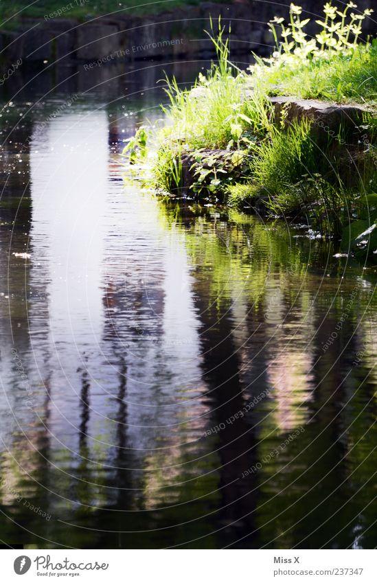 an der Ach Natur Wasser ruhig Gras Fluss Flussufer Wasseroberfläche Bach Wasserspiegelung