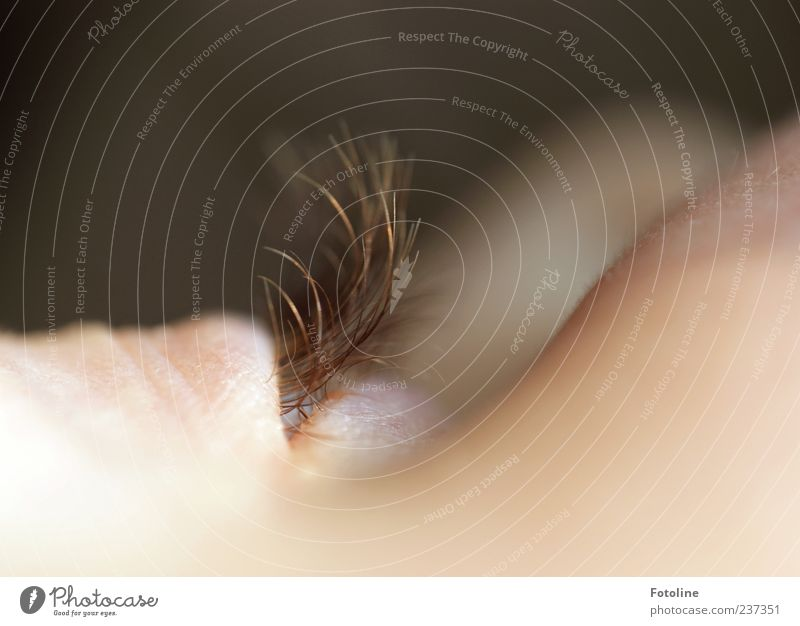 Wimpernschlag Mensch schön Auge feminin hell Haut natürlich weich Momentaufnahme Wange Makroaufnahme Schatten