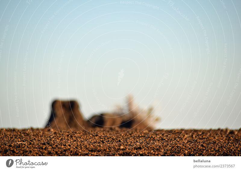 El Teide Umwelt Natur Landschaft Pflanze Erde Sand Luft Himmel Wolkenloser Himmel Horizont Sonnenlicht Frühling Sommer Klima Schönes Wetter Wärme Dürre