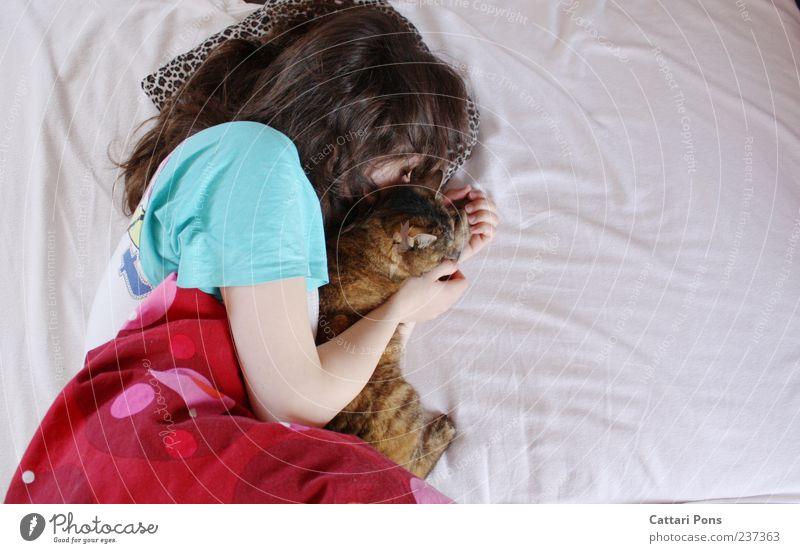 Zeit mit Dir, mein warmes Herz. Katze Frau Jugendliche Erwachsene Erholung feminin Zusammensein Zufriedenheit liegen Junge Frau schlafen Bett einzigartig weich berühren festhalten