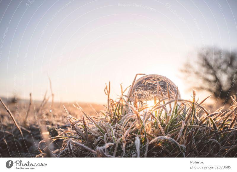 Natur schön Farbe grün weiß Winter natürlich Schnee Gras Design hell Dekoration & Verzierung Wetter glänzend Coolness Sauberkeit