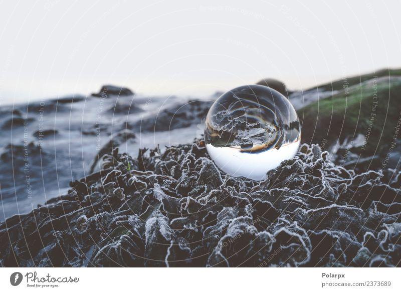 Glaskugel auf gefrorenen Blättern schön Winter Umwelt Natur Pflanze Erde Wetter Moos Blatt Hügel Kugel Globus glänzend dunkel frisch hell nachhaltig Sauberkeit