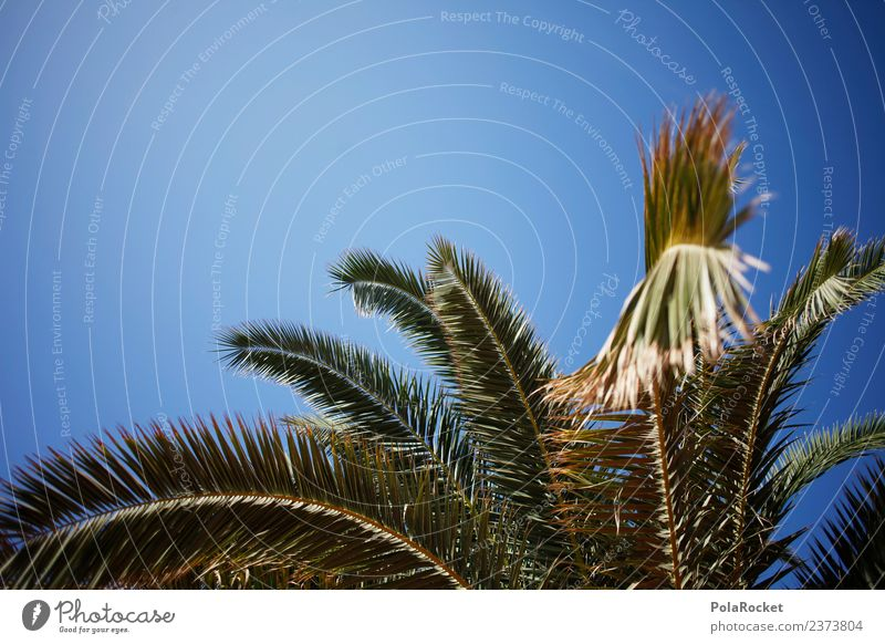 #A# Palm Island Umwelt Natur ästhetisch Palme Palmenwedel Palmenstrand Palmenhaus Ferien & Urlaub & Reisen Sommerurlaub Urlaubsstimmung Farbfoto Gedeckte Farben