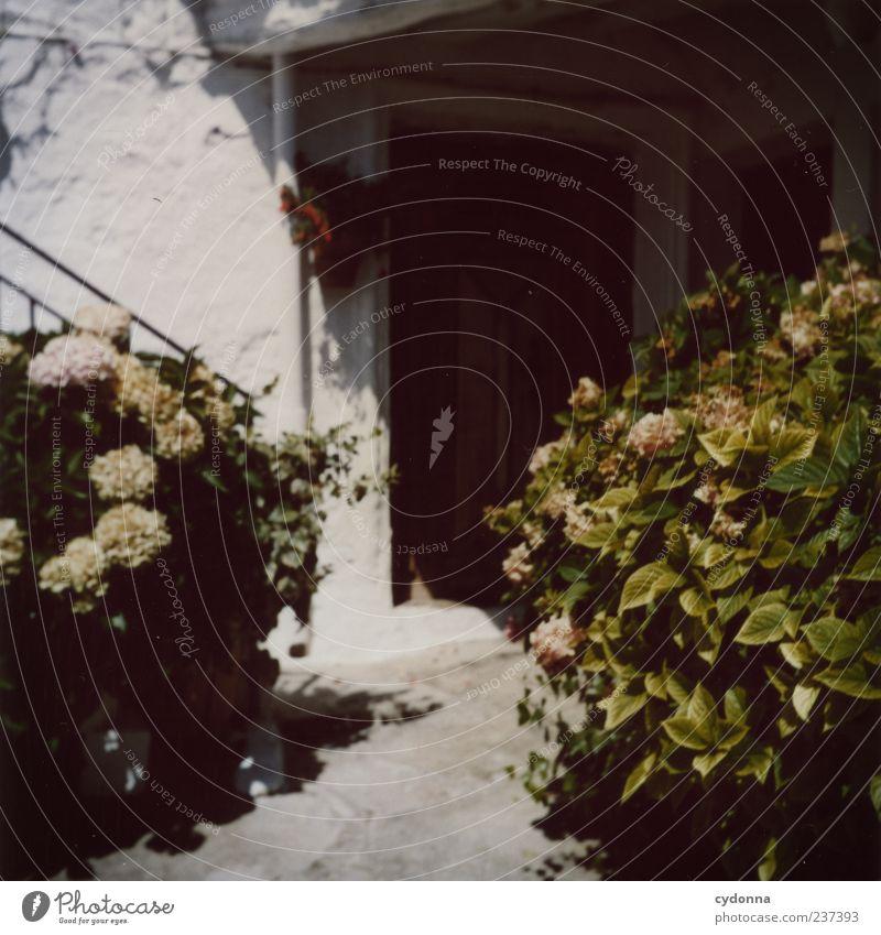 Eingangstür Lifestyle Wohlgefühl Erholung ruhig Ferien & Urlaub & Reisen Tourismus Häusliches Leben Umwelt Sommer Pflanze Blume Sträucher Haus Mauer Wand Treppe
