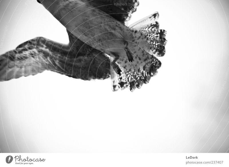 Seagull Luft Wolken Wetter schlechtes Wetter Wind Sturm Tier Wildtier Vogel Flügel 1 fliegen ästhetisch dunkel kalt trist wild grau Traurigkeit Sehnsucht