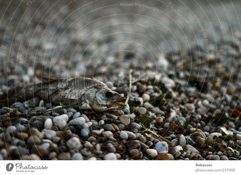 Der graue Tod Natur Sommer Klimawandel Alpen Seeufer Gardasee Tier Wildtier Totes Tier Fisch Tiergesicht 1 alt trist Wahrheit authentisch Traurigkeit Sorge
