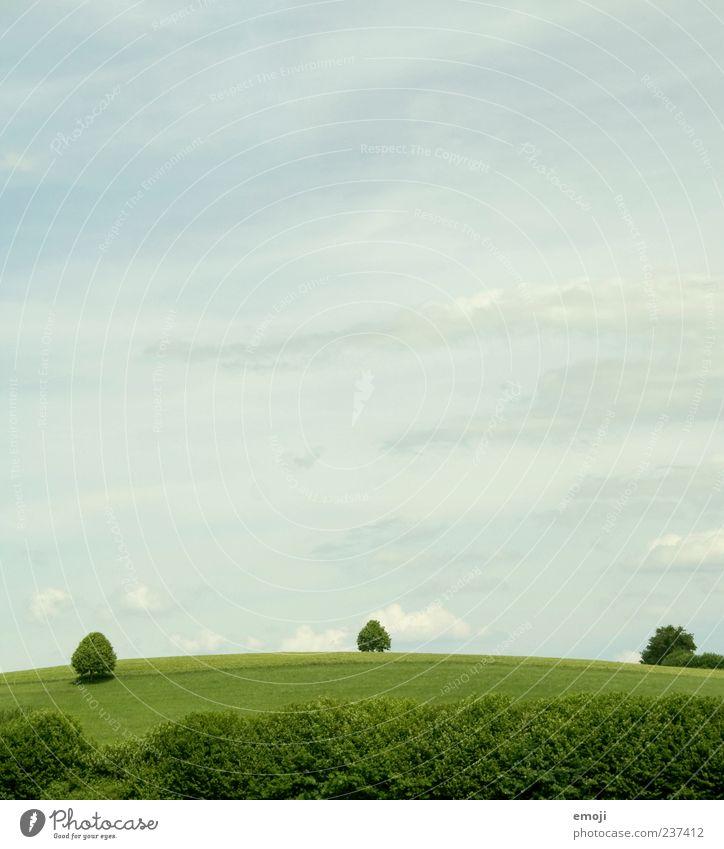Schweizer Bauern Umwelt Natur Landschaft Erde Luft Himmel Sommer Baum Gras Sträucher Grünpflanze Feld natürlich grün Farbfoto Außenaufnahme Menschenleer