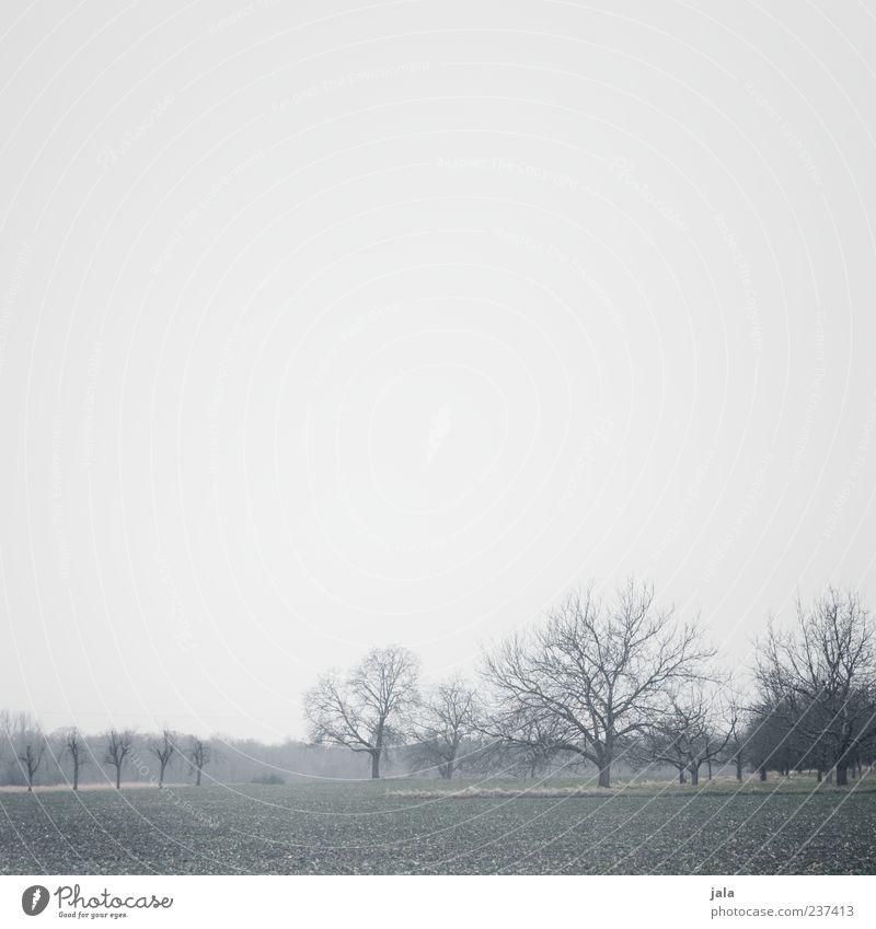 morgens Himmel Natur Baum Pflanze Wald Ferne Umwelt Landschaft Gras Feld Nebel trist Grünpflanze Morgen