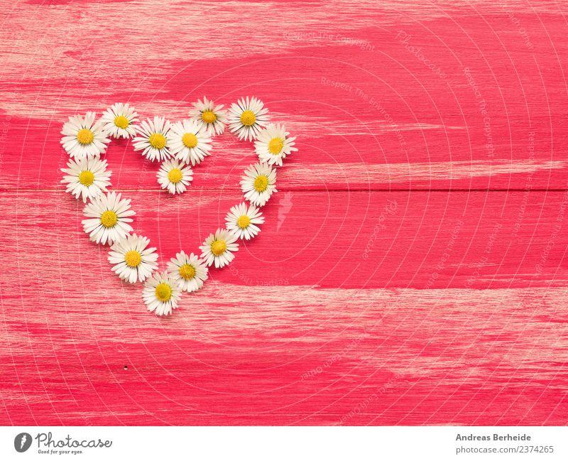Herz aus Gänseblümchen auf rotem Holz Stil Design Sommer Valentinstag Muttertag Geburtstag Natur Pflanze Blume Blüte Liebe gelb rosa heart flower daisy white
