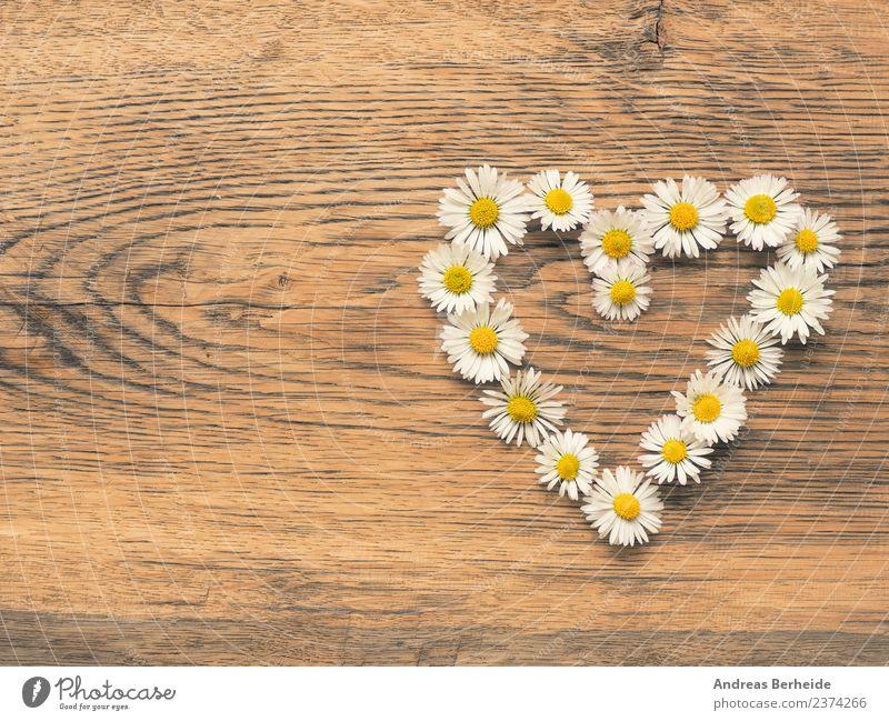 Herz aus Gänseblümchen Natur Pflanze Sommer Blume gelb Hintergrundbild Liebe Stil springen Grafik u. Illustration planen Lebewesen Symbole & Metaphern