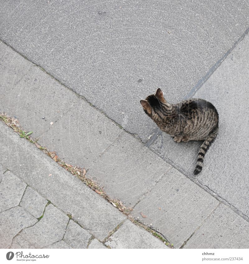 Sraßenstreuner Katze schön Tier ruhig Straße Freiheit grau sitzen Streifen einzigartig beobachten Asphalt Bürgersteig Wachsamkeit Haustier Fuge