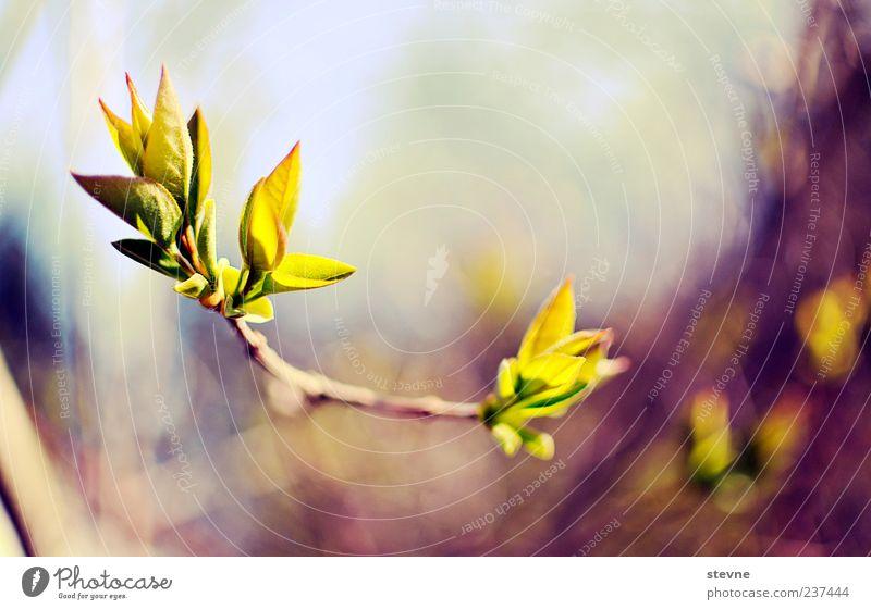 P f l a n z e. Natur Frühling Schönes Wetter Pflanze Farbfoto Außenaufnahme Menschenleer Zweige u. Äste zart zierlich Blüte Wachstum Textfreiraum oben