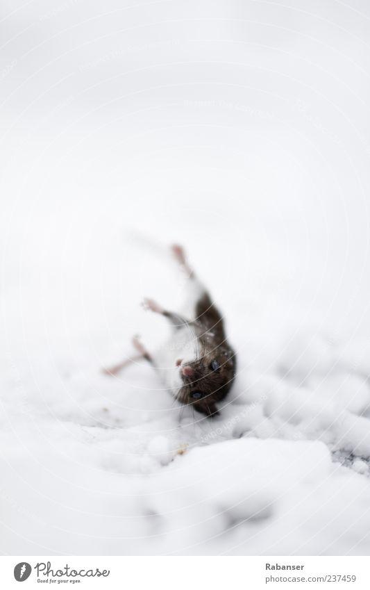 Der Blick Natur Tier Tod Auge Schnee Traurigkeit Stimmung Eis Klima wild frei Frost Trauer Vergänglichkeit Fell Tiergesicht