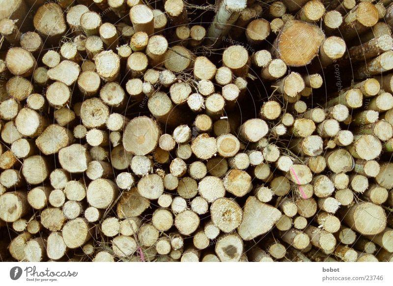 1000 Jahre Baumstamm Holz braun Baumrinde Jahresringe Haarschnitt Stapel Holzscheibe Fensterscheibe whoiscocoon