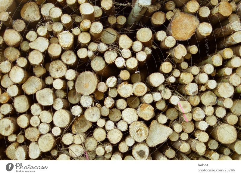 1000 Jahre Holz braun Baumstamm Fensterscheibe Stapel Baumrinde Haarschnitt Jahresringe