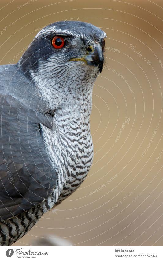 Natur rot Tier Wald Umwelt Auge Vogel frei Wildtier Europa Wissenschaften Europäer Umweltschutz Tierliebe Greifvogel Bussard