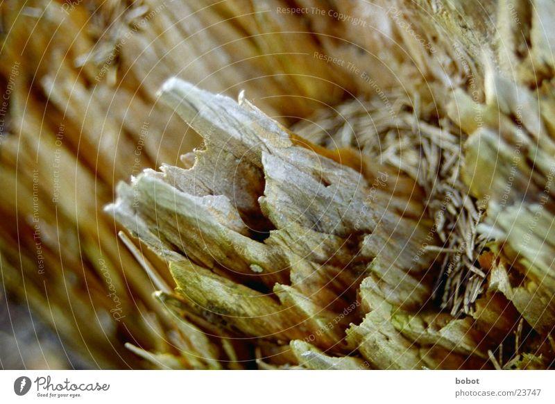 Baumberge Holz brechen splittern braun Splitter Ecke morsch tief Niveau eckig whoiscocoon Tannennadel