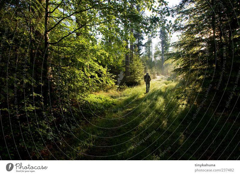 nachdenken Mensch Mann Natur grün ruhig Erwachsene Wald Erholung Frühling Wege & Pfade gehen wandern Spaziergang Schönes Wetter Fußweg harmonisch